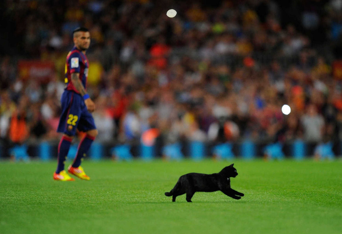 Black cat in the Camp Nou, in Barcelona vs Elche